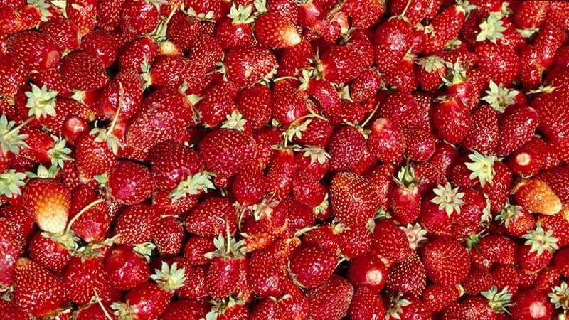 strawberries-recipes